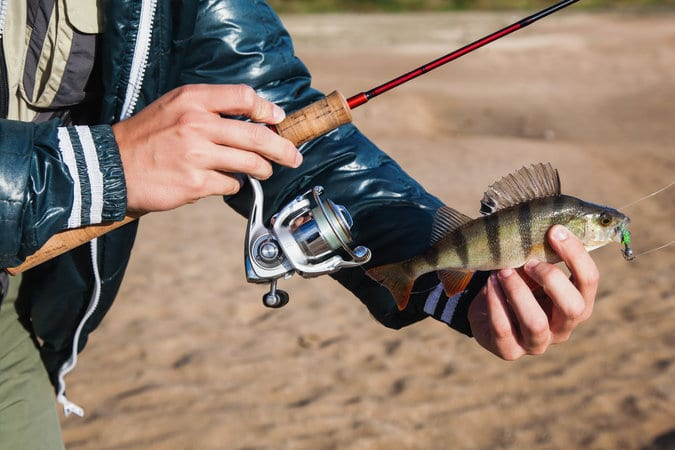 Top 5 Best Fishing Rods in 2020 Reviews Guide