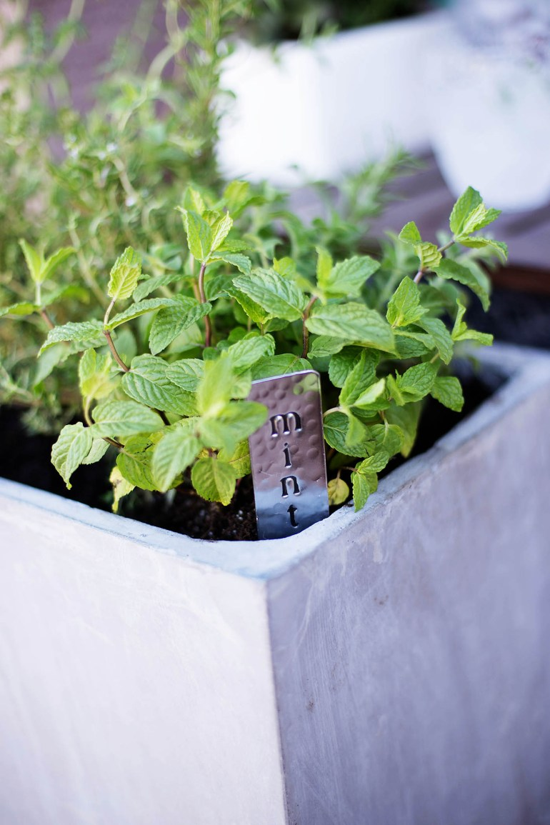 Easily incorporate herbs into your backyard decor plus a tip on using wheels to find the best spot for herbs especially in the harsh desert!