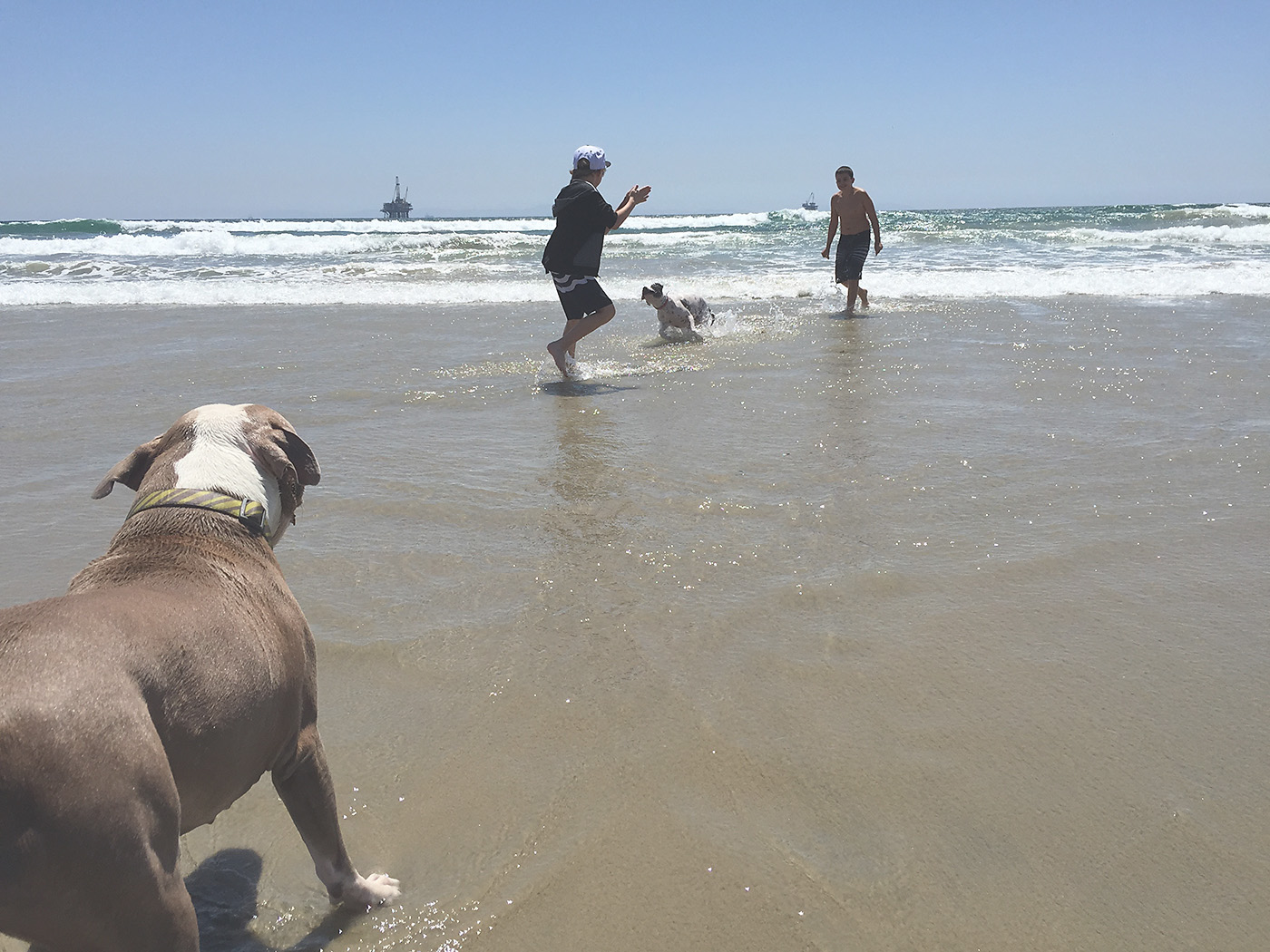 Dog Beach in Southern CA