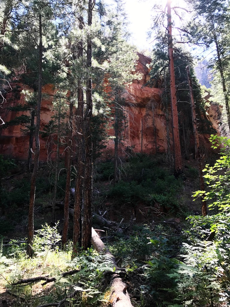 West Fork Trail Sedona, AZ
