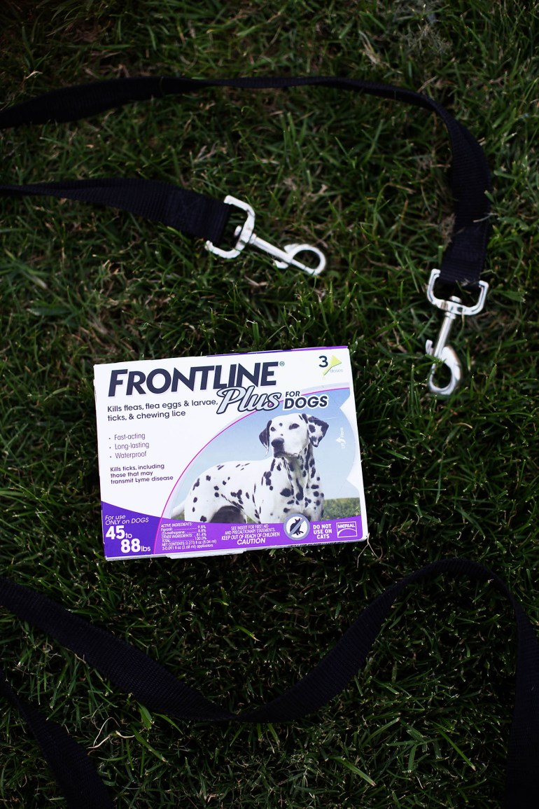 Keeping dogs safe from fleas and ticks