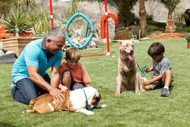 cesped artificial mascotas cesar millan