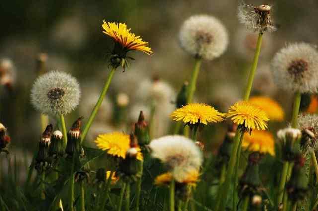 tratamientos mala hierbas
