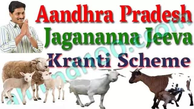 AP Jagananna Jeeva Kranti Scheme Online Apply : Sheep & Goat Units to BC / SC / ST / Minority Women