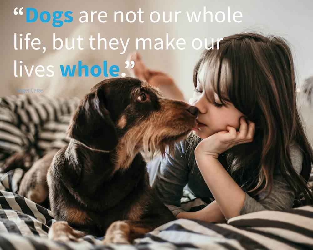 dog and cute girl