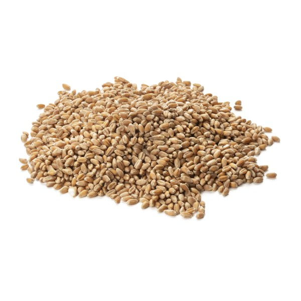 blés anciens bio pour farine