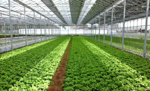 subvention pompage solaire agricole