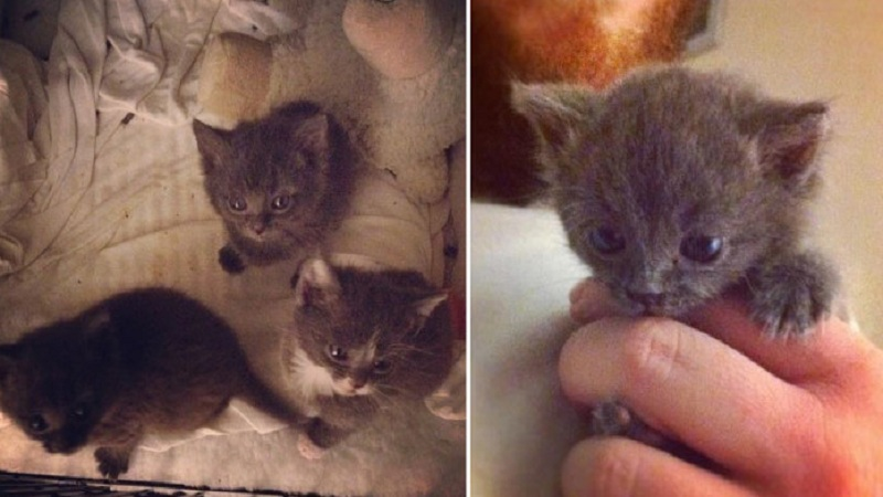 Monster Abandoned Three Kittens, But No One Expected THIS To Happen (VIDEO)