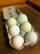 Duck eggs from Aston Crews