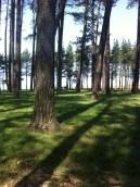 May Hill shadows