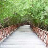 Iberostar Paraiso Maya beach bridge