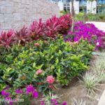 Dreams Playa Mujeres grounds