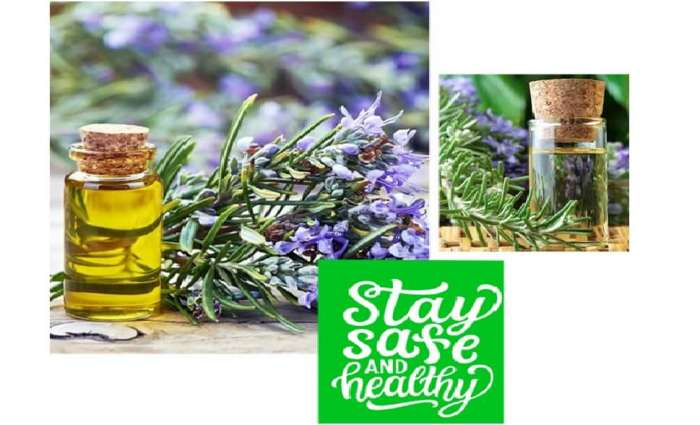 Rosemary oil manufacturers in India