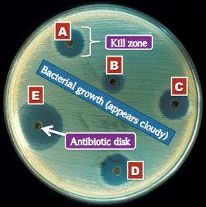 AntibioticTesting