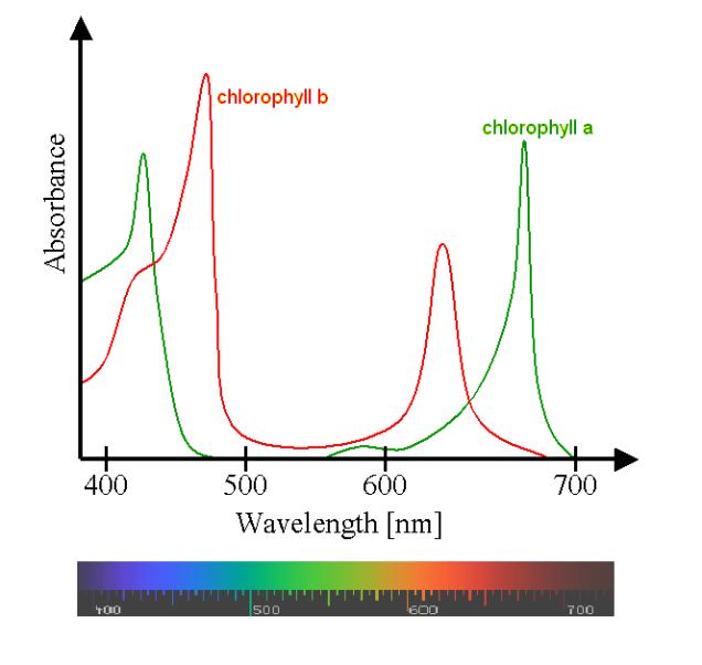 chloroplastabsorbspectrum