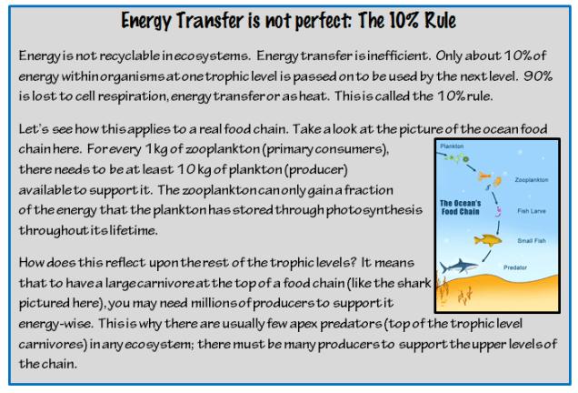 ecologyEnergyTransferRule.png