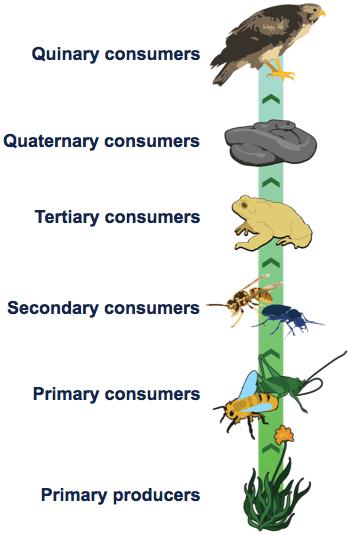 ecologyTrophicLevels