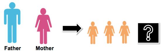 geneticsgenderchances2.png