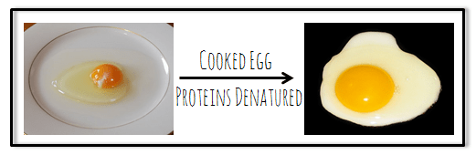 proteinsegg