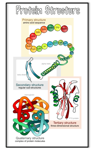 proteinsStructure