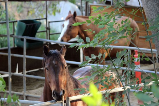 EQUINE: Hanging at the horse stables in Fullerton, CA.