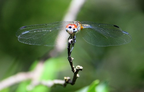 DRAGONFLY. He looks like he's wearing gloves.