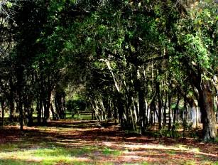 Inviting Path. Lake Mills Park, Oviedo, FL