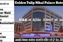 Photo of 110 Male Female Candidates Needed,  to work  in Golden Tulip Nihal Palace Hotel LLC
