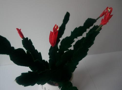 16.cactus de Noël en feutrine
