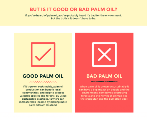 palm oil facts