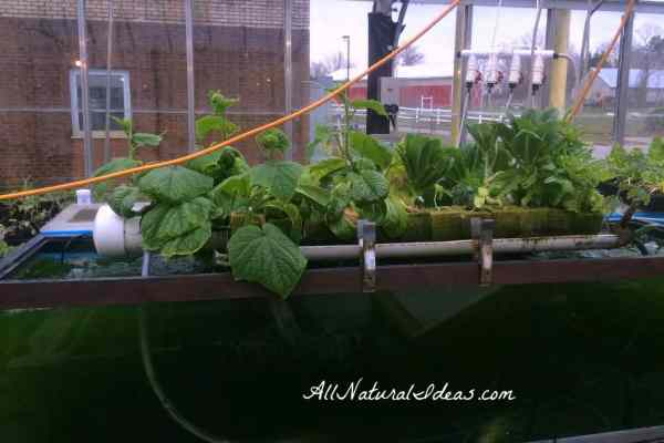 indoor gardening vegetables year round Grow Vegetables Indoors Year Round | All Natural Ideas