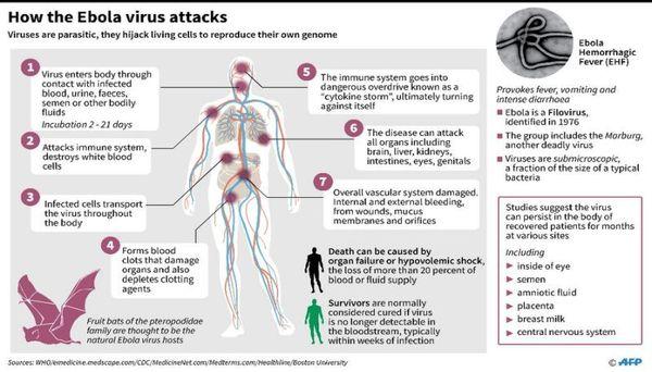 ebola_virus_attacks.jpg