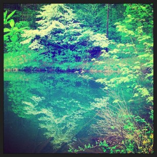 Nature Reflected