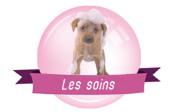 toilettage chien chat redon allaire canin félin soins