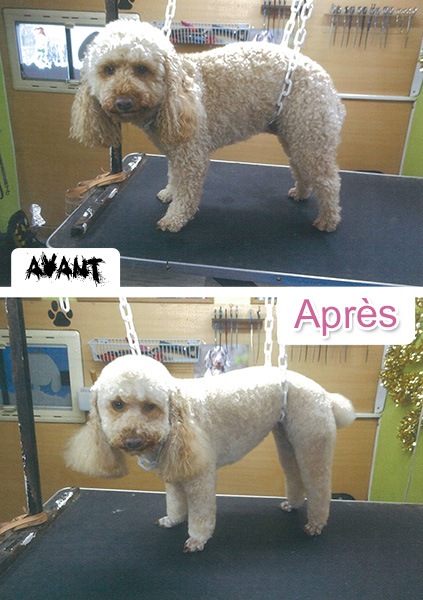 toilette_redon_chiens_chats_4