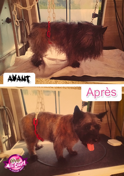 toilettage-chiens-chats-redon-5