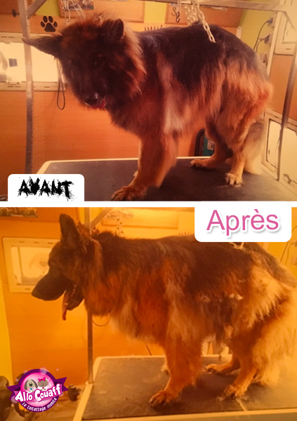 toilettage-chiens-chats-redon-9