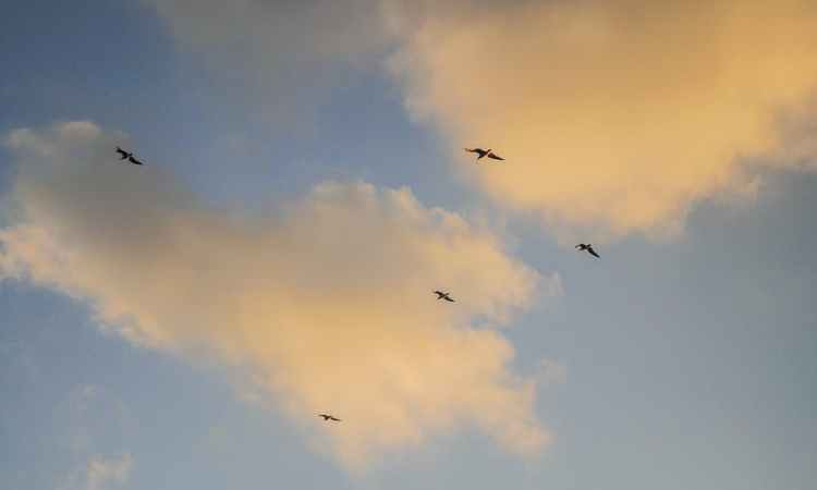 flight dawn sky sunset