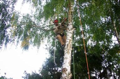 Arrimage des branches