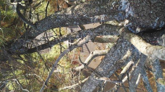 Danger de chute de branches
