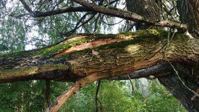 Abattage arbre la bohalle