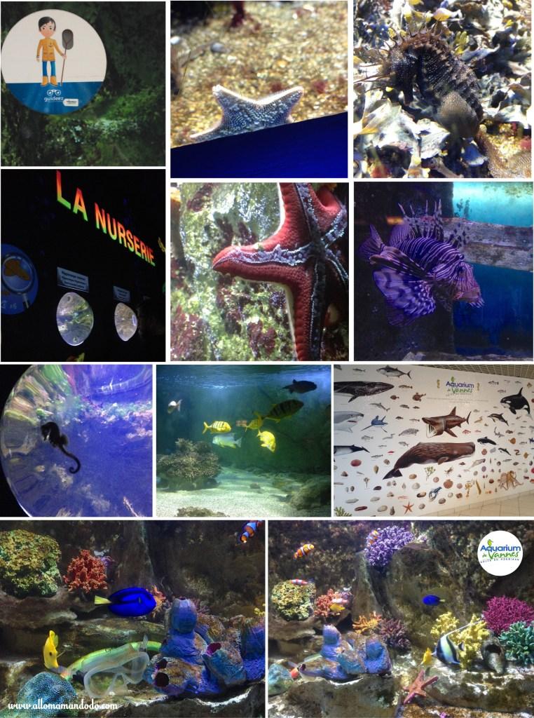 aquarium de vannes avis