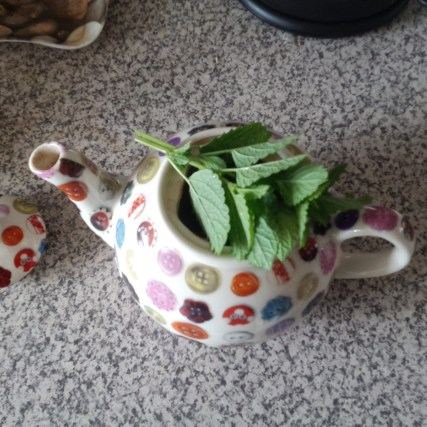 Lemon balm for tea