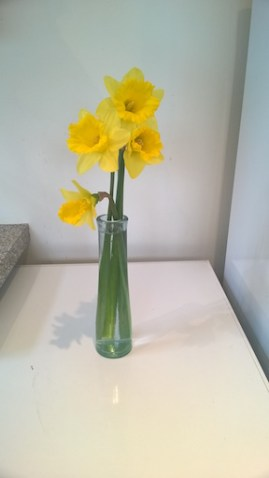 Vase daffodils