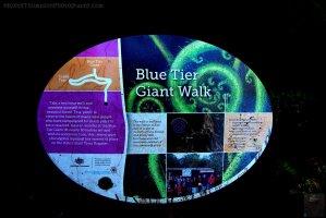 Big Tree Walk Weldborough.002 11h12m13s2019 06 04