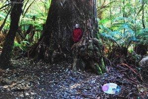 Big Tree Walk Weldborough.031cp 11h55m26s2019 06 04