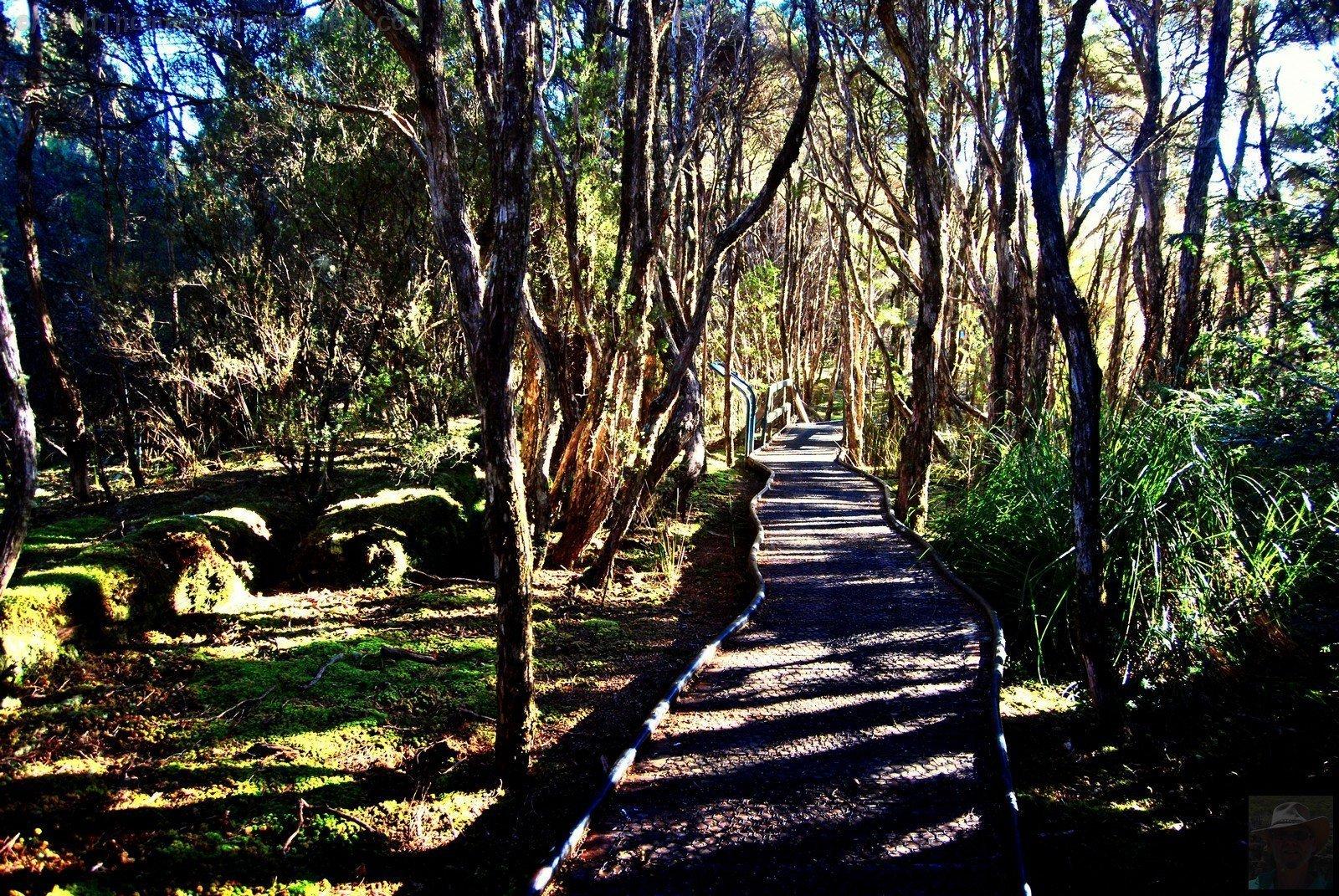Goblin Forest Walk Blue Tier.003 11h09m35s2019 06 07 JPG