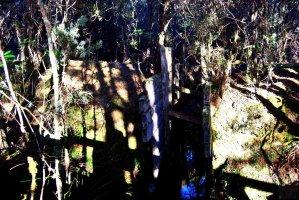 Goblin Forest Walk Blue Tier.007 11h10m48s2019 06 07 JPG