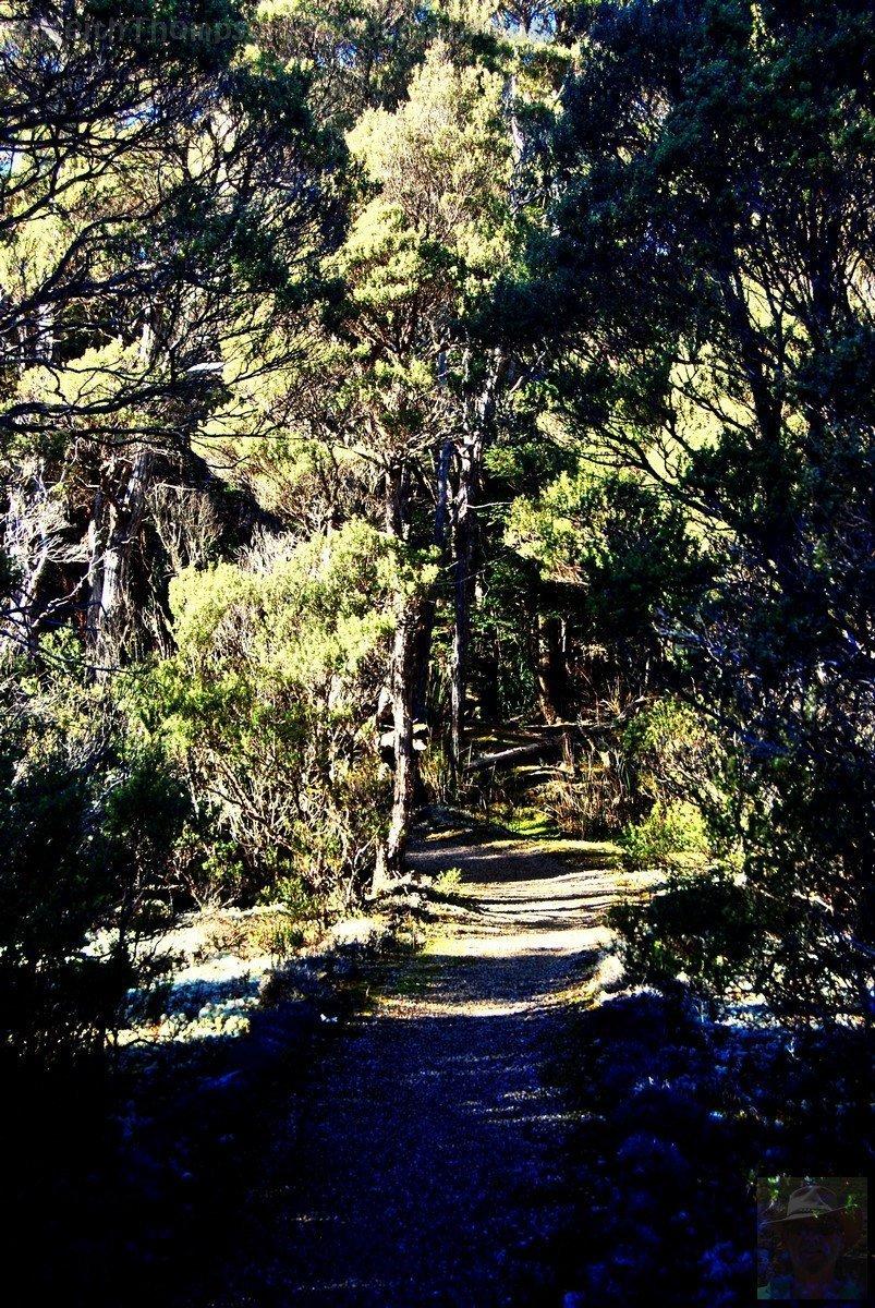 Goblin Forest Walk Blue Tier.012 11h12m57s2019 06 07 JPG