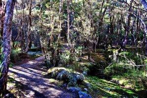 Goblin Forest Walk Blue Tier.013 11h13m46s2019 06 07 JPG